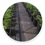 ground-cover-img