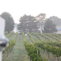 AVIX Autonomic - Laser - Vineyard
